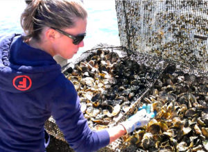 Sheila Lucero Inspecting Oysters